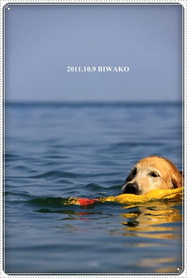 2011,10,9琵琶湖6