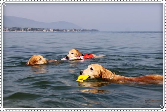 2011,10,9琵琶湖5