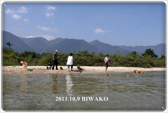 2011,10,10琵琶湖1