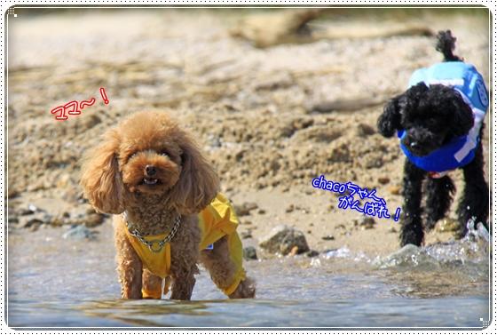 2011,10,10琵琶湖19