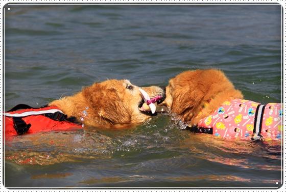 2011,10,10琵琶湖16