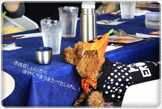 2011,10,17わんわん倶楽部3