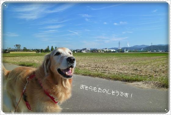 2011,10,19お散歩4