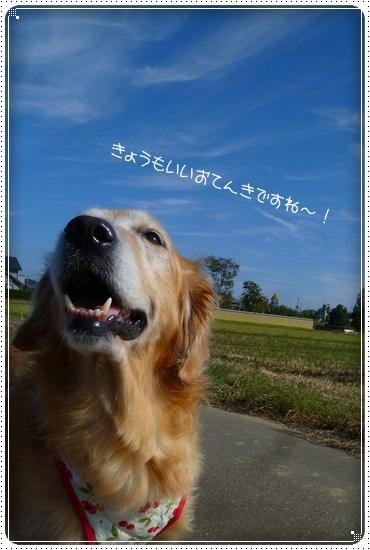 2011,10,19お散歩1