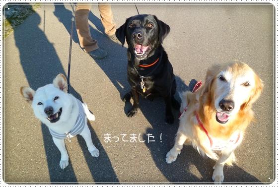 2011,10,19お散歩10