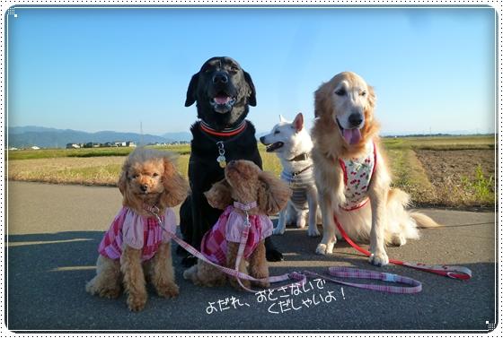 2011,10,19お散歩9