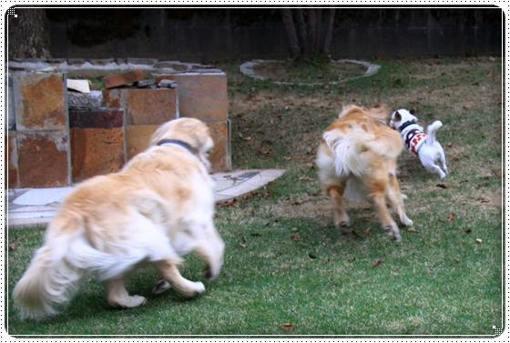 2011,10,21お庭遊び12