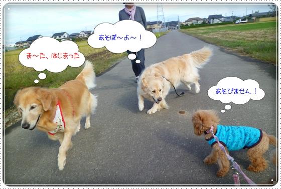 2011,10,24お散歩6