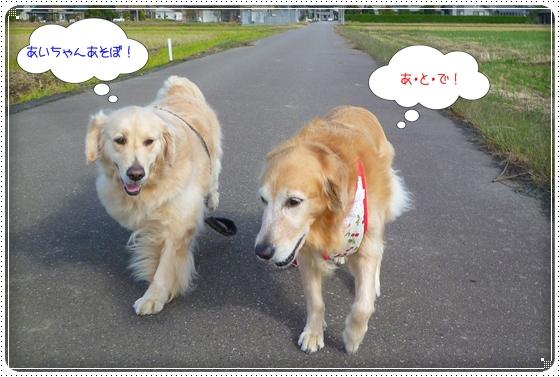 2011,10,24お散歩3