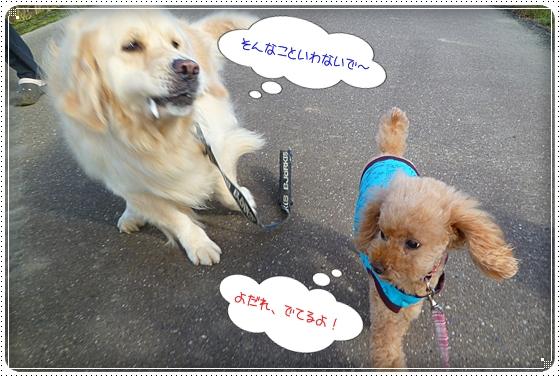 2011,10,24お散歩11