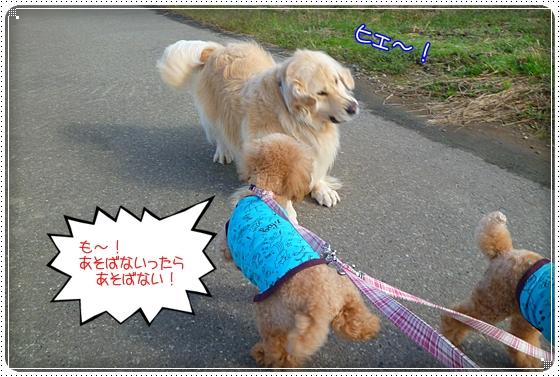2011,10,24お散歩10