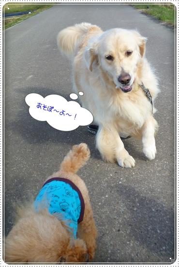 2011,10,24お散歩9