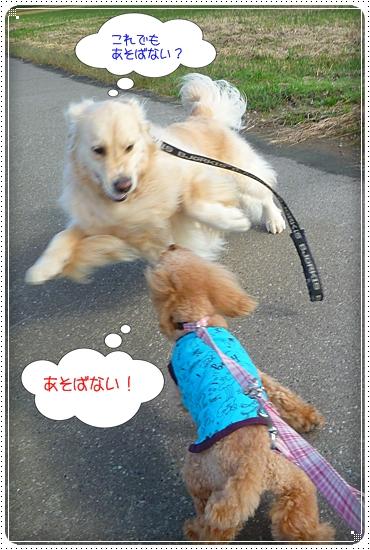 2011,10,24お散歩8