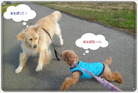 2011,10,24お散歩7