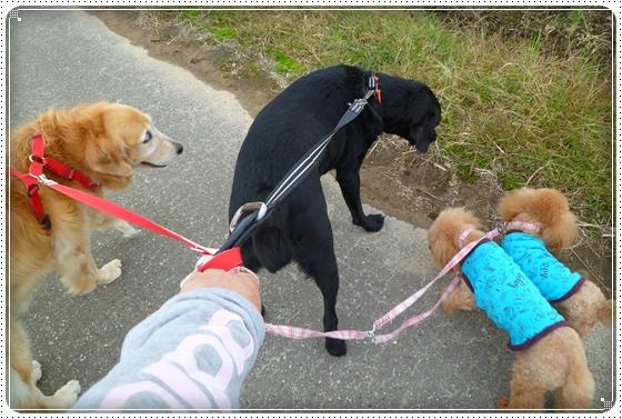 2011,10,24お散歩15
