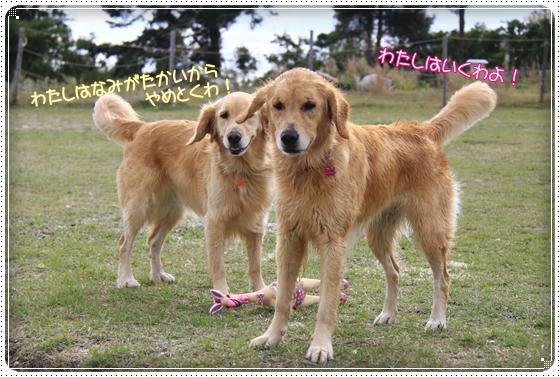 2011,10,27琵琶湖12