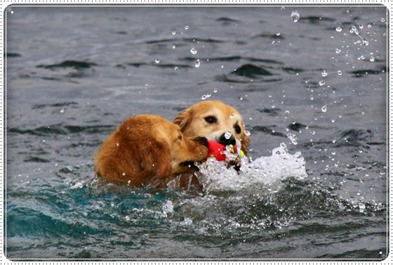 2011,10,27琵琶湖18