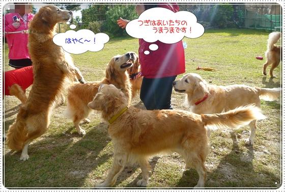 2011,10,28琵琶湖6