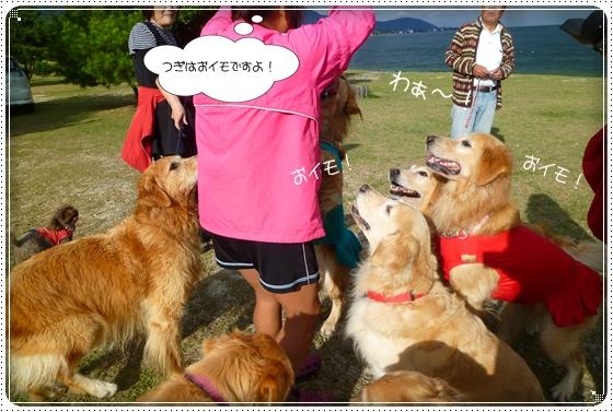 2011,10,28琵琶湖11