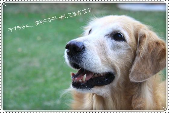 2011,10,30お庭遊び12