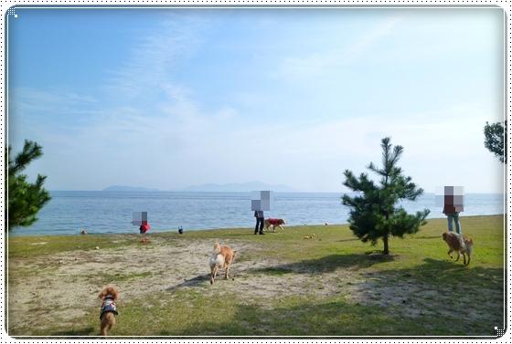 2011,11,3琵琶湖4