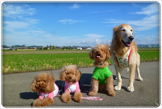 2011,11,12お散歩3