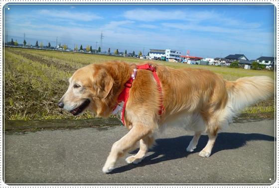 2011,11,12お散歩1