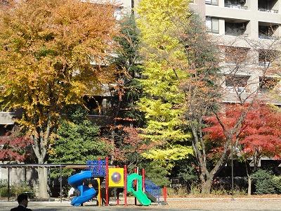 1012yokozuna001.jpg