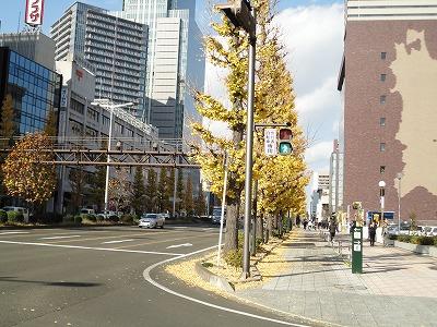 1012yokozuna002.jpg