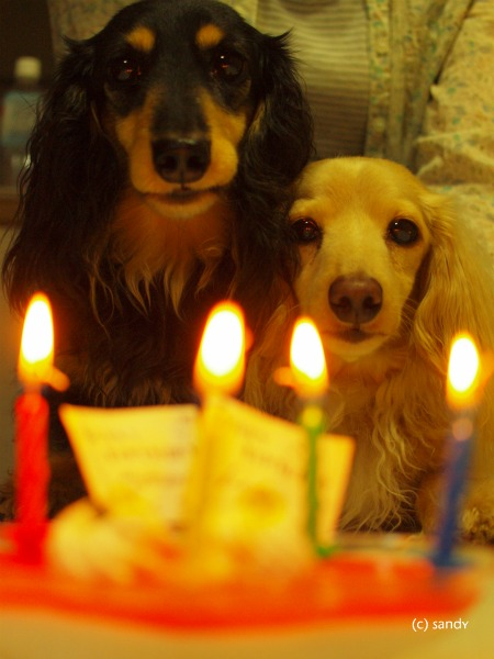 birthday dogs02