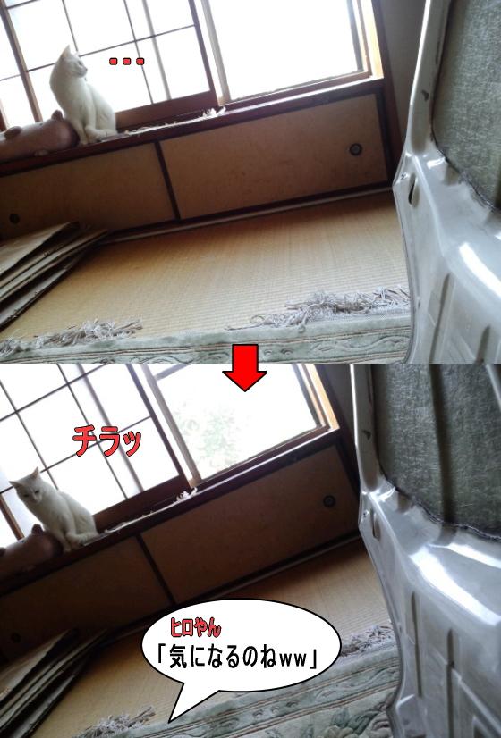 airuu1004_20111114212147.jpg