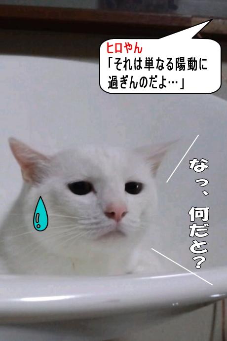 airuu533.jpg