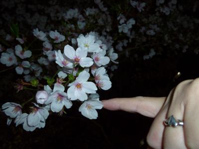 桜2_convert_20120413215939