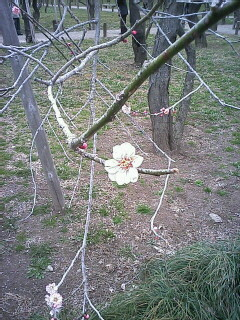 2007-03-17_15-010001.jpg