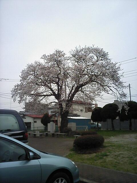 sakura200704012.jpg