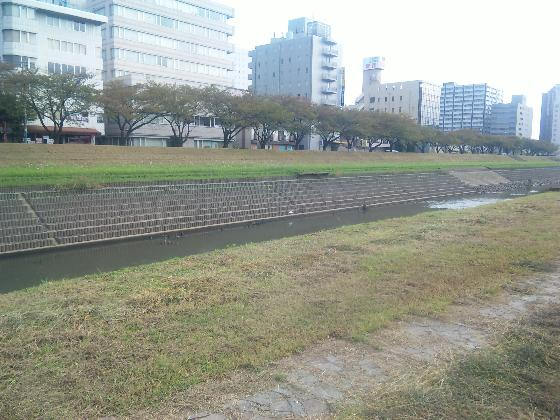 sakuragawazoide.jpg