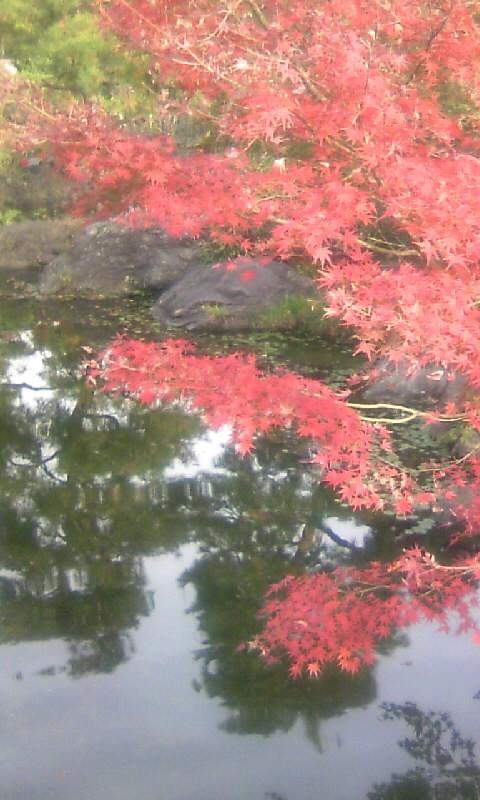 101130_142112白鳥庭園
