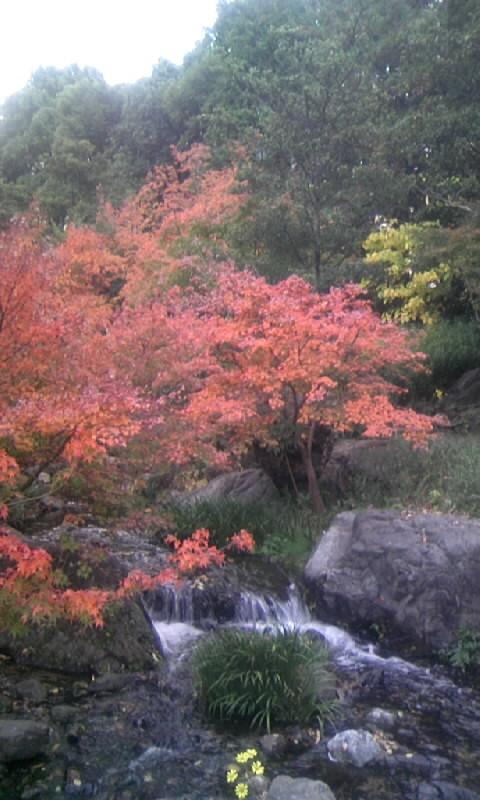 101130_151901白鳥庭園