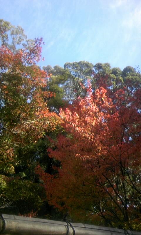 101201_100919徳川園