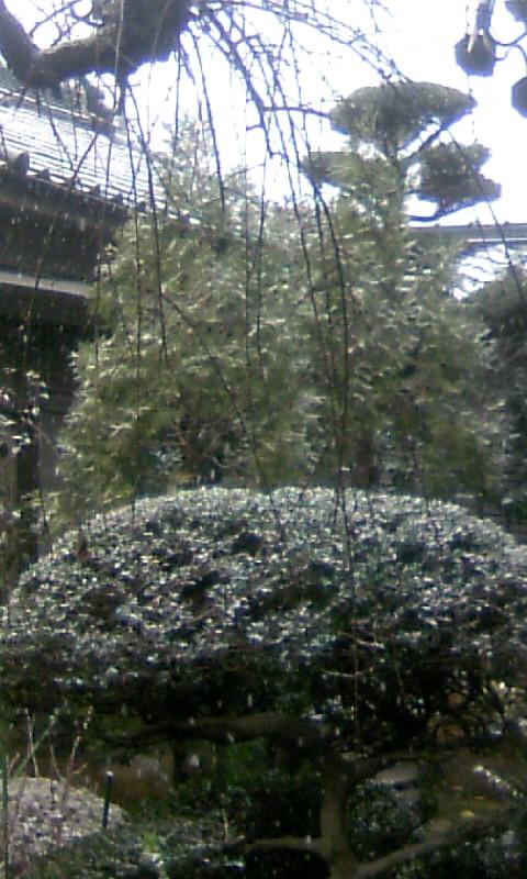 101231_090021大晦日の初雪