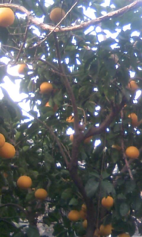 110109_073927柑橘いっぱい