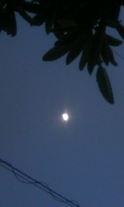 110113_172724上弦の月