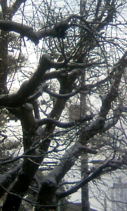 110116_094547モミジの裸木