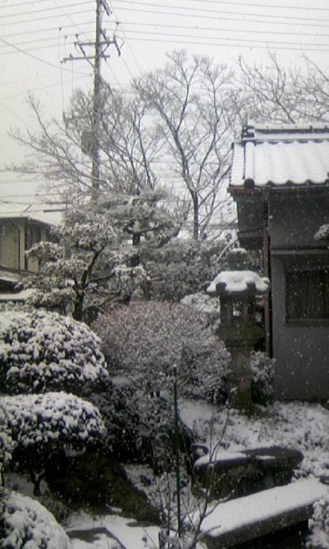 110116_115137庭の雪