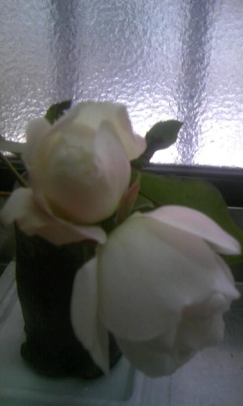 110116_115737薔薇
