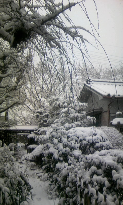 110116_125810庭の雪