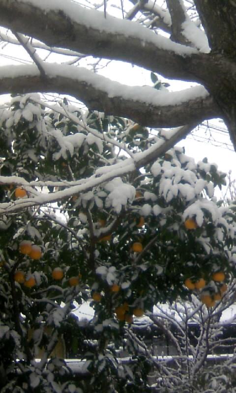 110116_125908柑橘