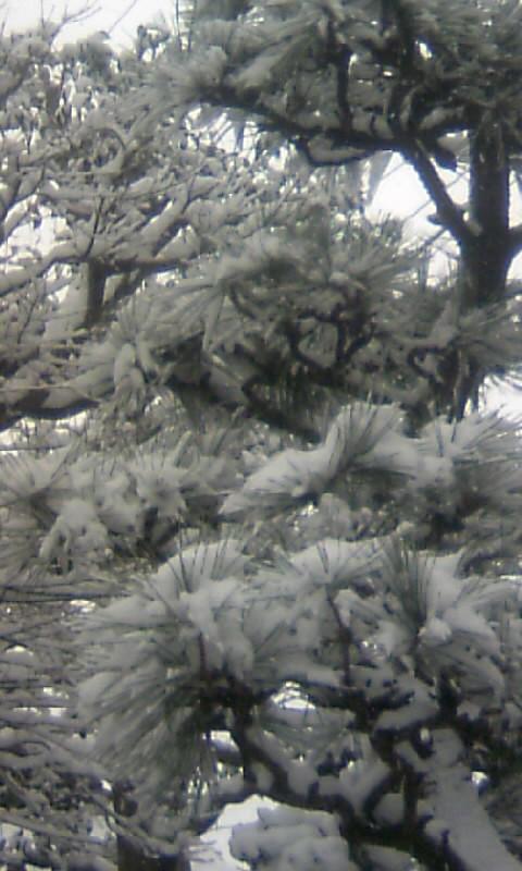 110116_130541庭の雪