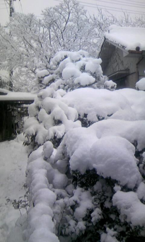 110117_071452庭の雪