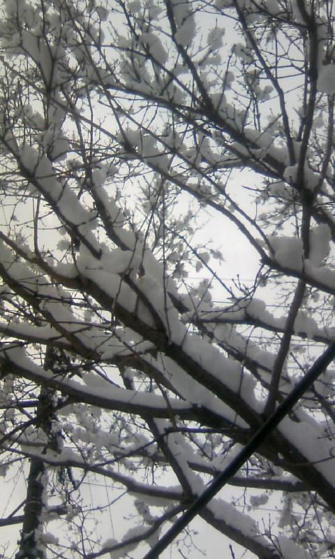 110117_101140雪のなんじゃもんじゃ